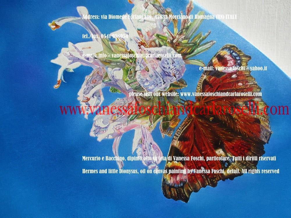 farfalla su rosmarino-papillon et romarin