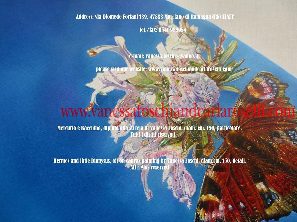 rosmarino in fiore e farfalla Vanessa
